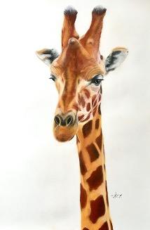 Giraffe on pastelmat paper