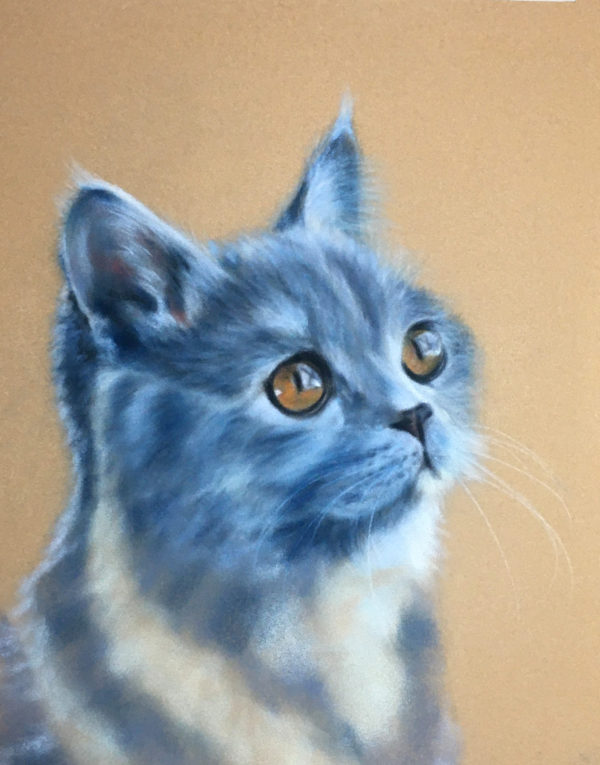 Blue Cat Pastel Art Kit